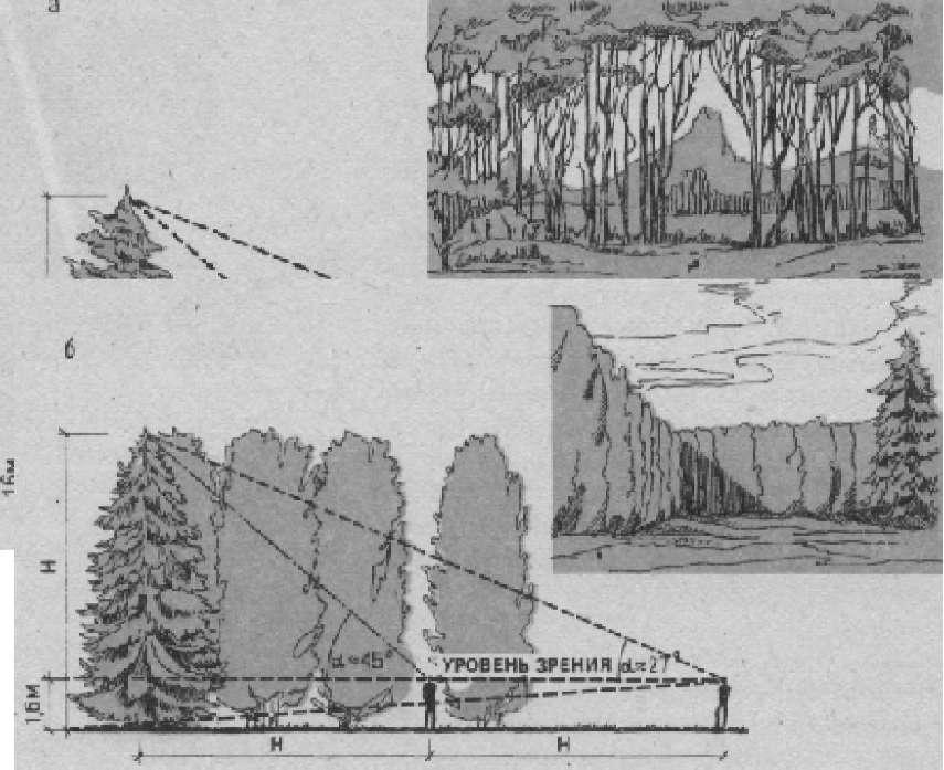 Влияния форм и положения древесных зон на восприятие паркового пространства