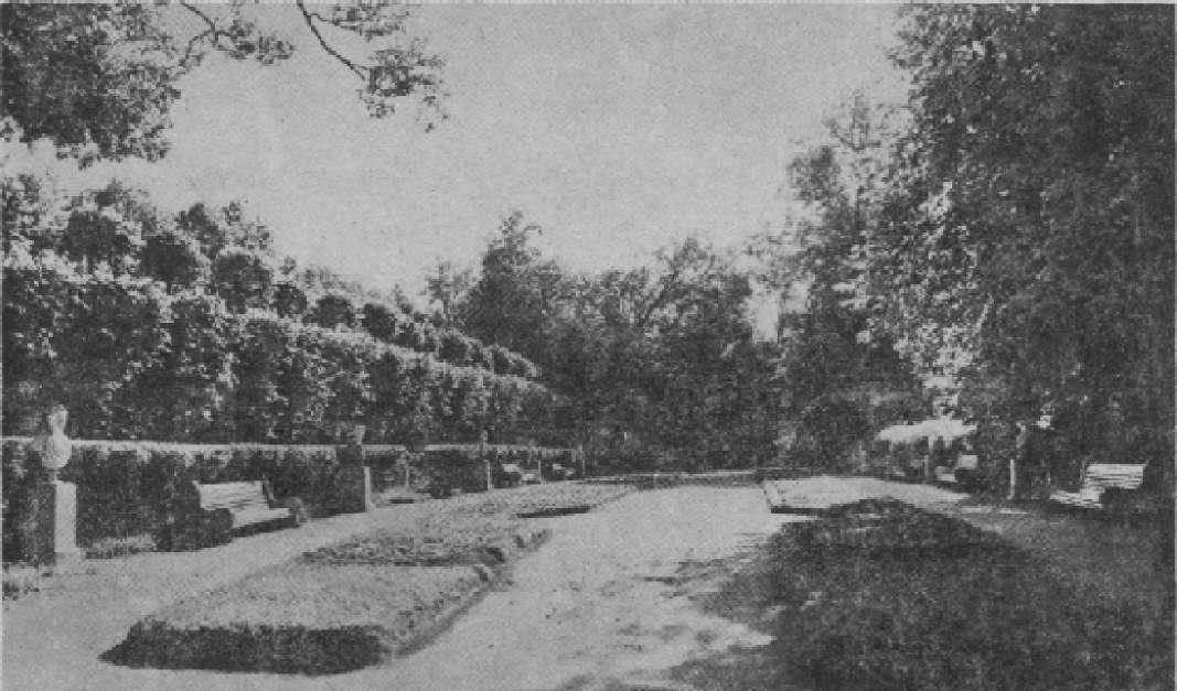 Регулярная аллея в парке