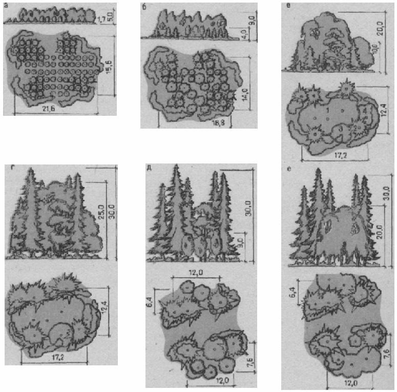 Динамика развития внешнего облика растительной группы в различные возрастные периоды