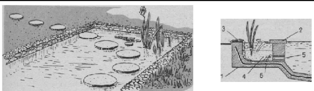 Размещение водных растений в водоеме