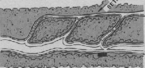 Функционально-поточная схема зонирования территории города. Архит. Н. Милютин
