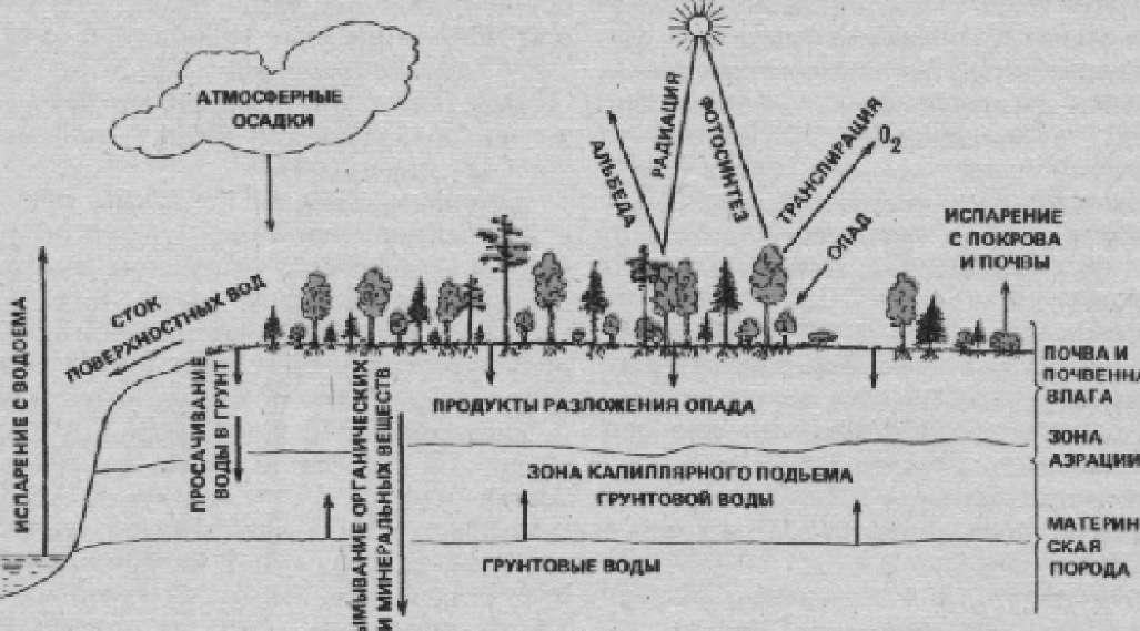 Схема взаимовлияния растений и среды
