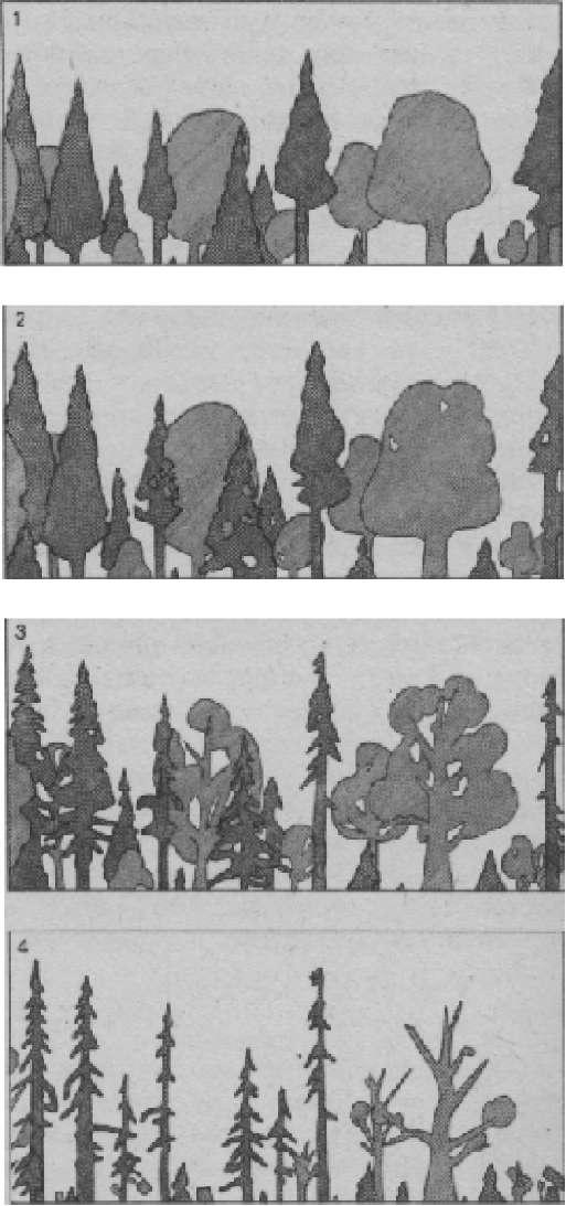 Этапы гибели пораженной растительности